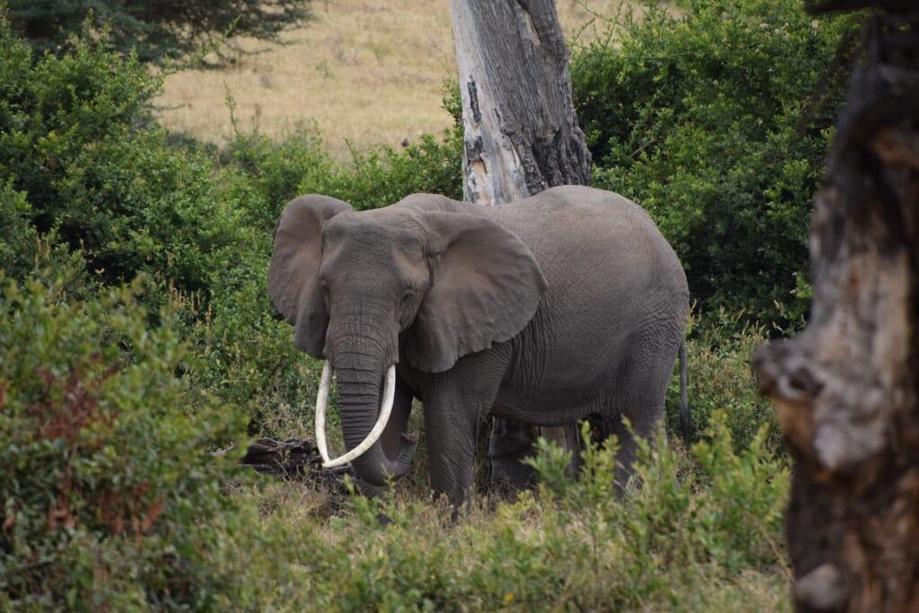 Tanzania safari elephant testimonial