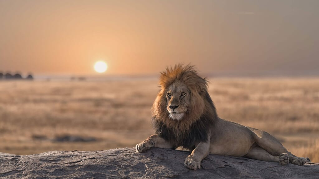 Best time to visit Tanzania Lion sunset serengeti family safari