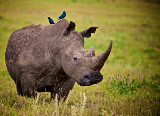 rhino-lewa-e1608472519250