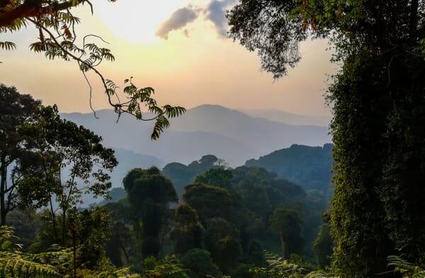 Rwanda nyungwe forest sunrise