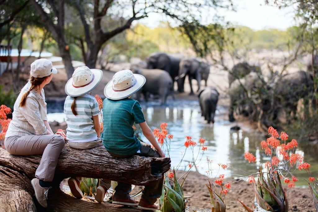 luxury family safari holidays africa elephants