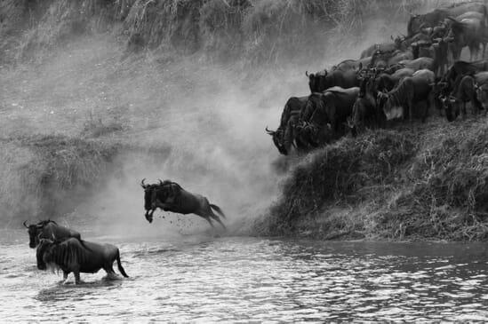 Tanzania great migration close up action serengeti family safari