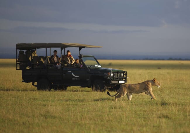 Tanzania game drive cheetah Grumeti