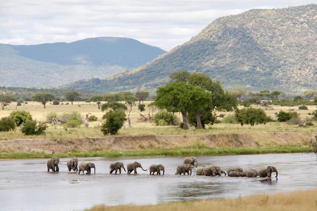 Tanzania elephants ruaha river crossing family safari