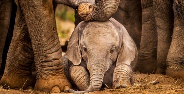baby elephant landscape tanzania