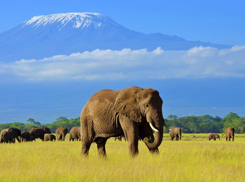Kenya elephant Amboseli Kilimanjaro