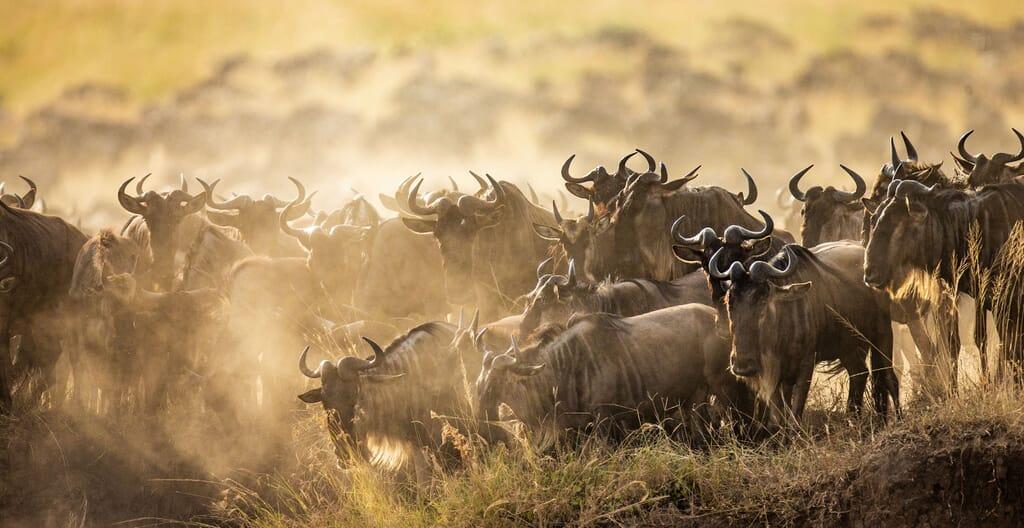 Best time to visit Tanzania serengeti great migration wildebeest family safari