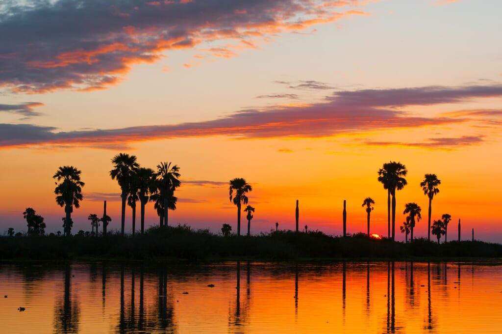 Tanzania nyerere national park sunset palm trees rufiji river family safari
