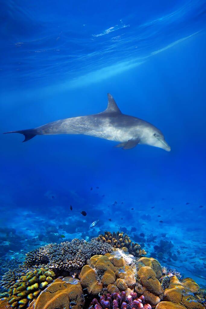 Tanzania Zanzibar dolphin reef family safari beach