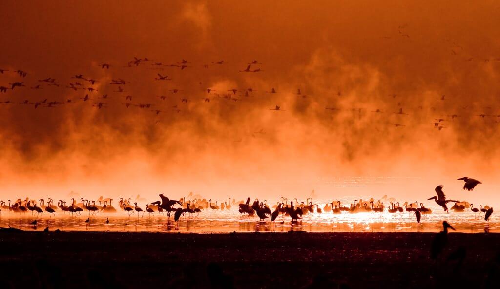 Kenya flamingoes sunset lake Rift Valley family safari