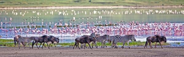 Ngorongoro crater waterhole wildebeest zebra family safari