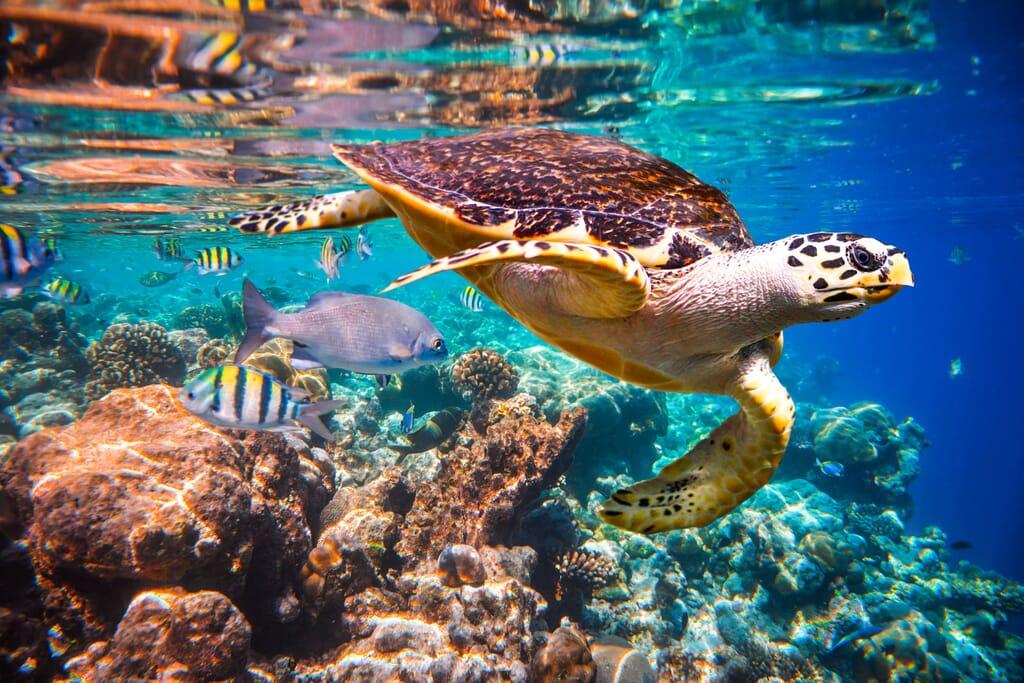 Zanzibar Tanzania hawksbill turtle coral reef family safari beach holiday
