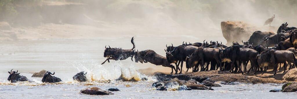 serengeti tanzania great migration wildebeest family safari