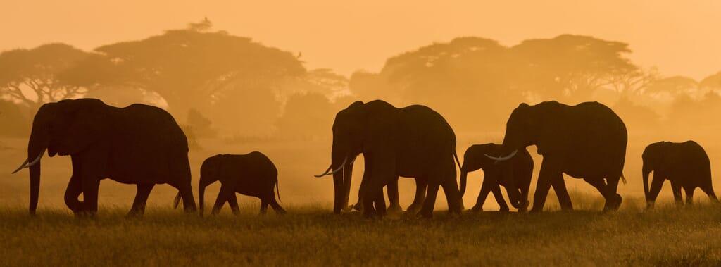 Tanzania regions to visit elephants family safari