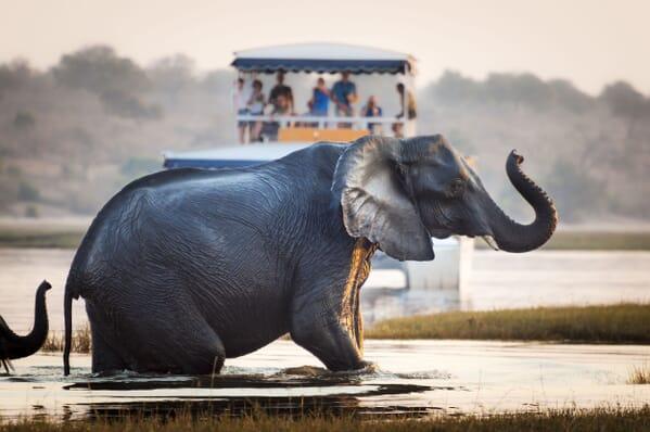 Botswana chobe elephant boat safaris