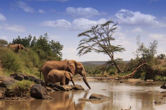 Kenya luxury safaris elephant Samburu water drinking