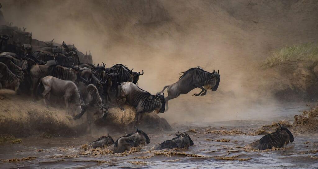 Tanzania great migration landscape serengeti family safari