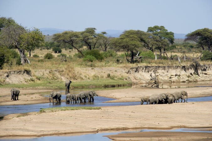 Tanzania Nyerere Sand Rivers Selous family safari elephant