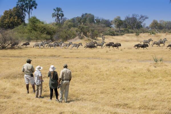 Botswana Sandibe andBeyond walking family safari