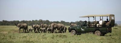 Kenya Masai Mara Kichwa Tembo family safari