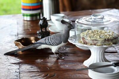 Kenya Lewa House afternoon tea bird family safasri