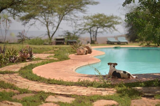 Kenya Lewa House swimming pool family safari