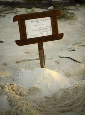 Tanzania Zanzibar andBeyond Mnemba island family safari turtle nest