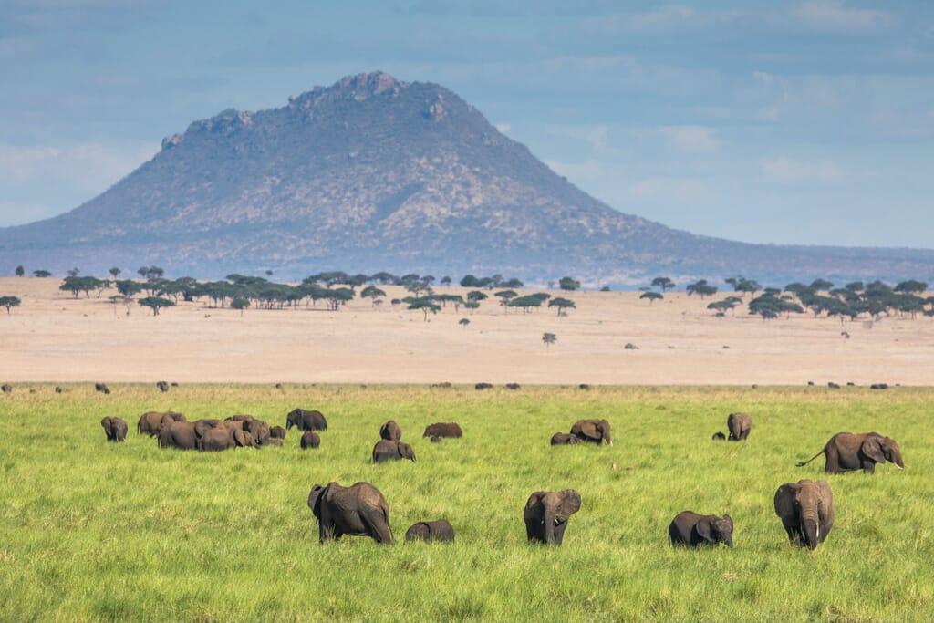 Tanzania Kuro Tarangire family safari