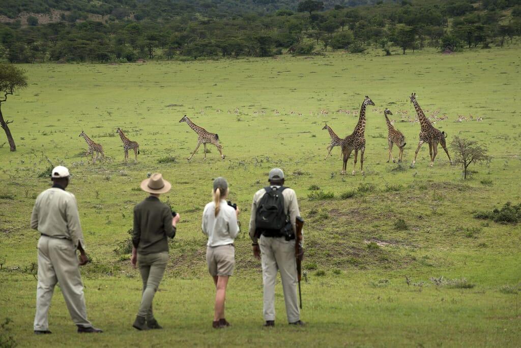 Tanzania Serengeti Kleins Camp andbeyond walking family safari
