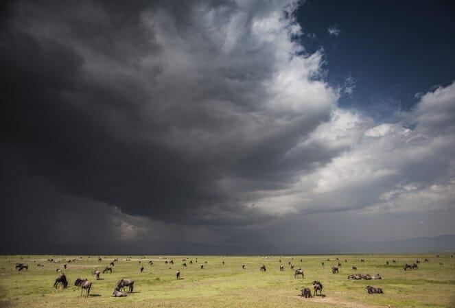 Tanzania Ngorongoro The Manor family safari