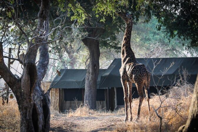 Tanzania Katavi Chada family safari
