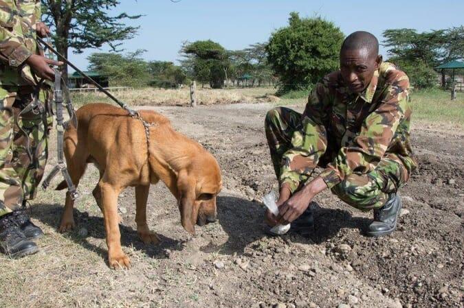 Kenya Ol Pejeta Kicheche Laikipia family safari