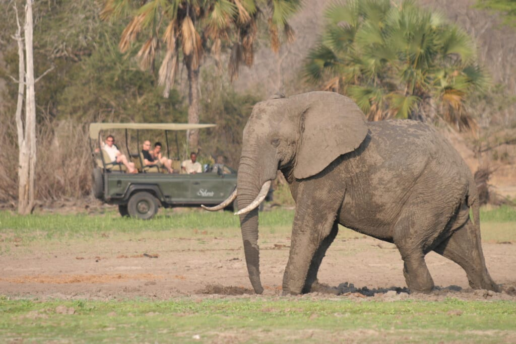 Prime-wildlife-area-in-Selous-makes-for-perfect-game-drives.jpg?w=1024&h=683&scale