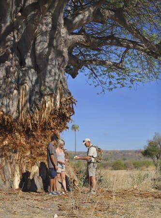 Tanzania Ruaha Jabali Ridge family safari