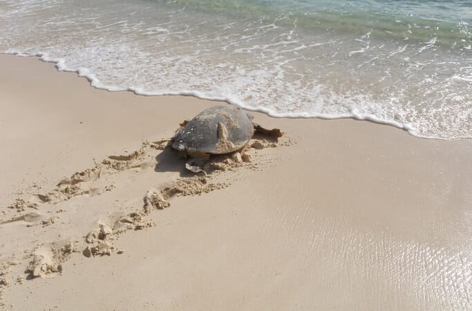 Constance Lemuria turtle beach walk