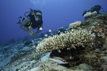 North Island Seychelles SCUBA diving