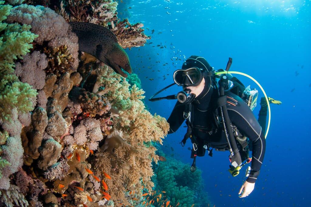 SCUBA diving moral eel