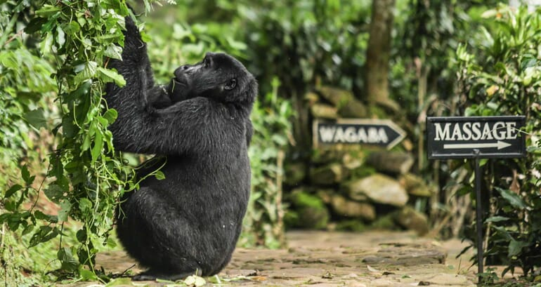 Gorilla Bwindi Lodge