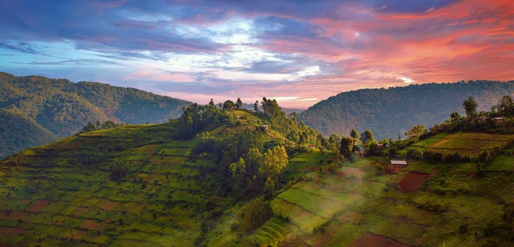 Uganda safari Bwindi Impenetrable Forest panorama sunset