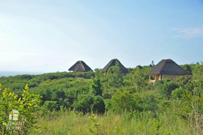 Elephant Plains Lodge