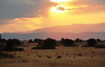 Ishasha Wilderness Camp Sunset Queen Elizabeth Uganda