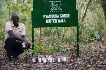 Kyambura Gorge walk