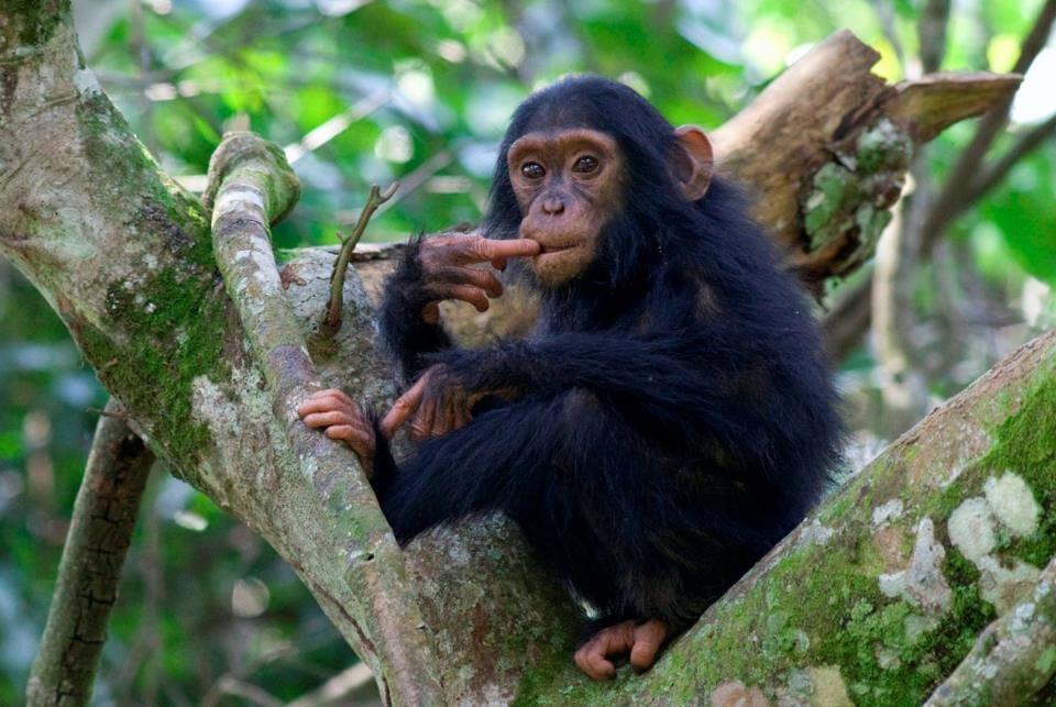 chimpanzee Kyambura gorge best time to visit Uganda