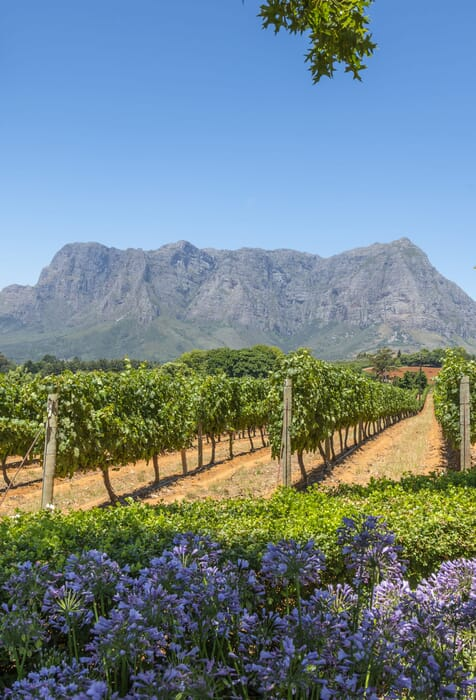 South-Africa-family-safari-holiday-Stellenbosch-winelands-potrait-scaled.jpg?w=476&h=700&scale