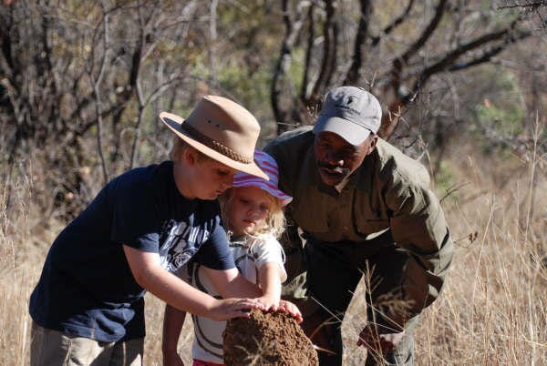 South Africa family safari holiday The Waterberg kids safari ants hill