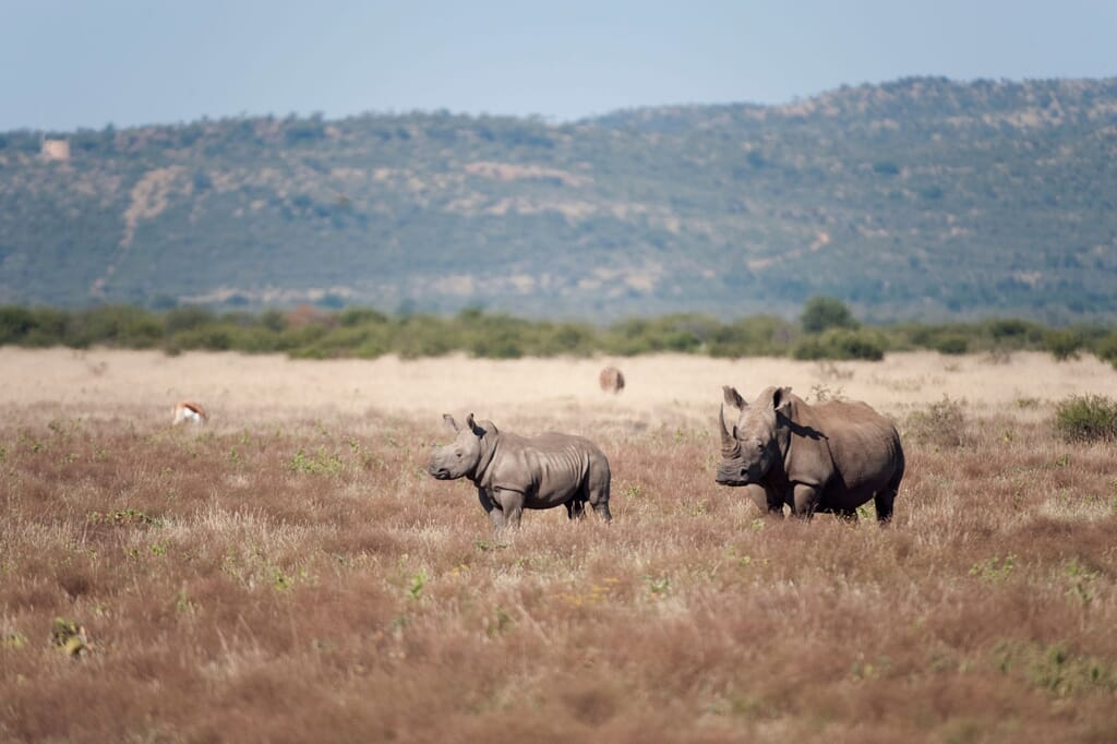 South Africa family safari holiday Madikwe Game Reserve rhino