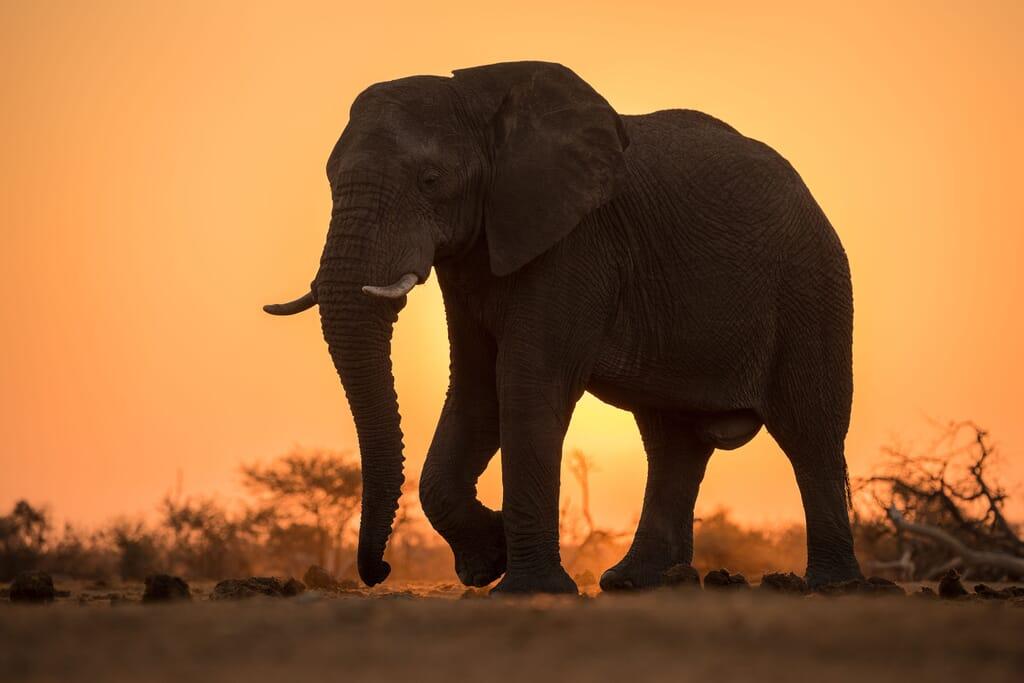 South Africa family safari holiday Madikwe Game Reserve elephant