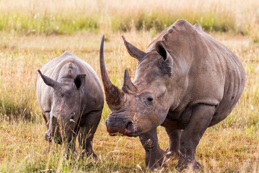 South Africa family safari holiday The Waterberg rhino